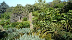 cape-town-botanical-garden