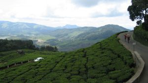 hills-of-kerala-3