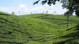 hills-of-kerala
