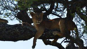 safari-19