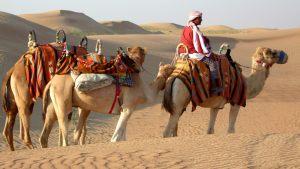 camels-dubai-desert