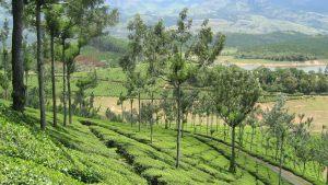 hills-of-kerala-2