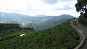 hills-of-kerala-3