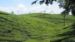 hills-of-kerala